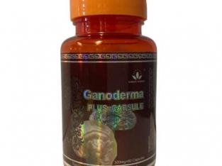 Capsule Ganodema Plus